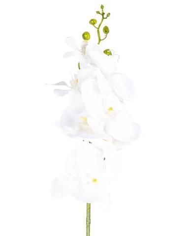 Kvety, vázy Vigan