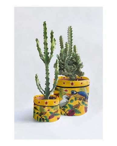 Kvety, vázy Madre Selva